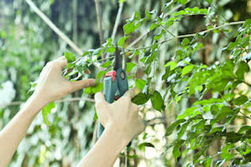 Tree pruning using handheld pruning shears
