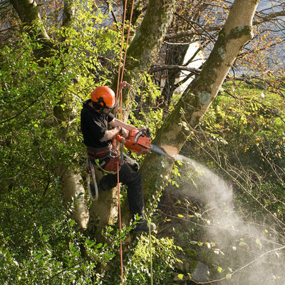 Tree Cutter in Alexandria